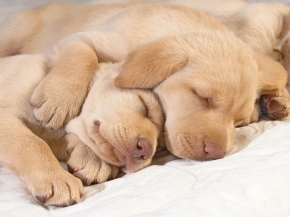 Cute-puppies-in-hug-puppies-14748941-1600-1200